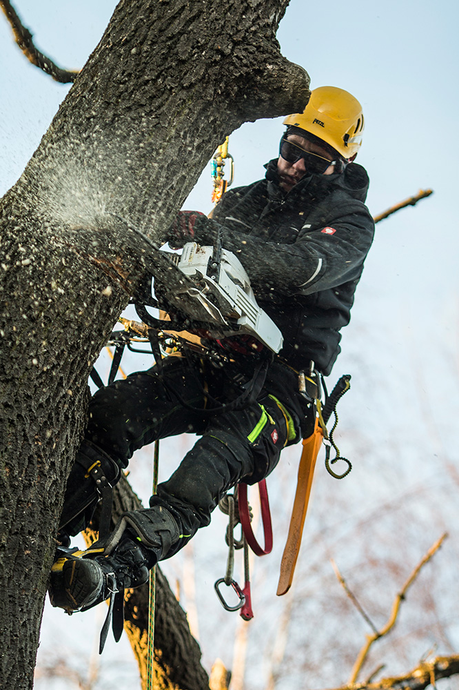 Maintenance And Clearing Of The Trees