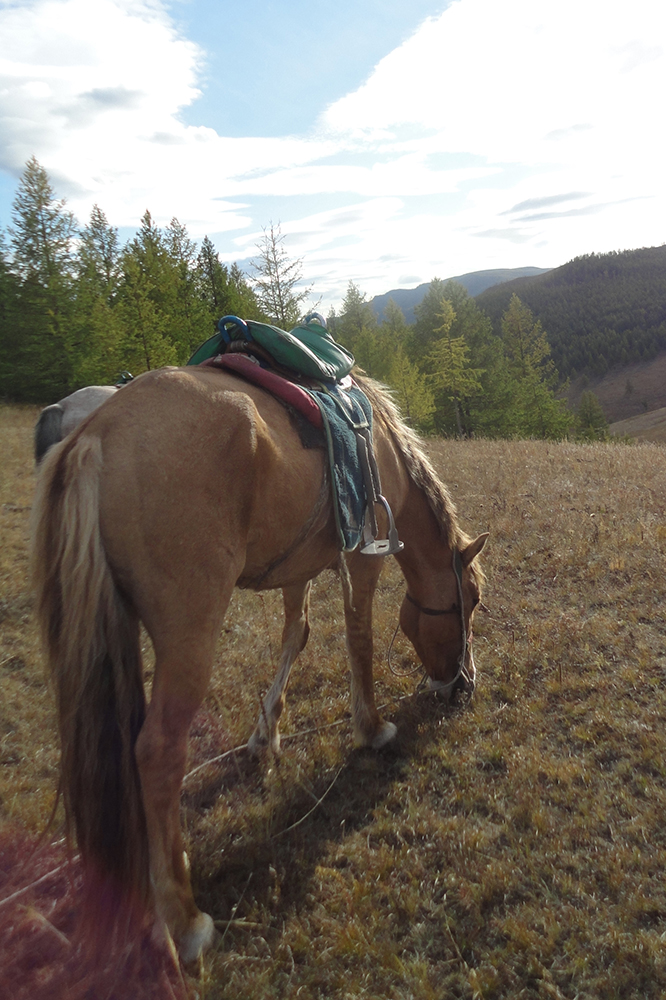 Horseback tours